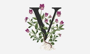 The Vines Cafe Logo